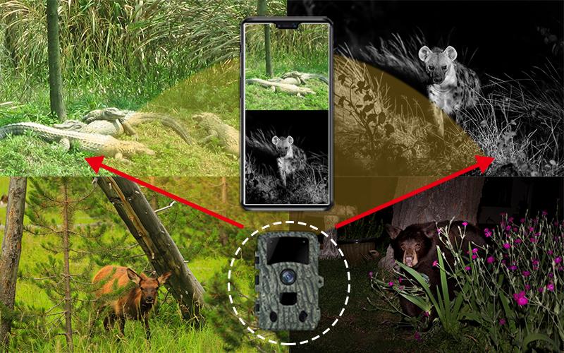 <b>野生动物侦察拍摄</b>