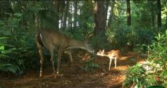你喜欢哪张?——专为红外相机举办的野生动物摄影大赛