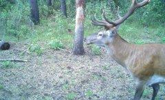 白天锐逸红外相机拍到的动物图片