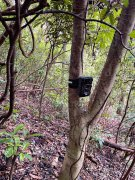 林业局监控设备红外线相机能拍到多少动物?
